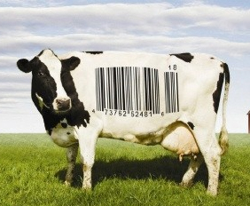cow-barcode